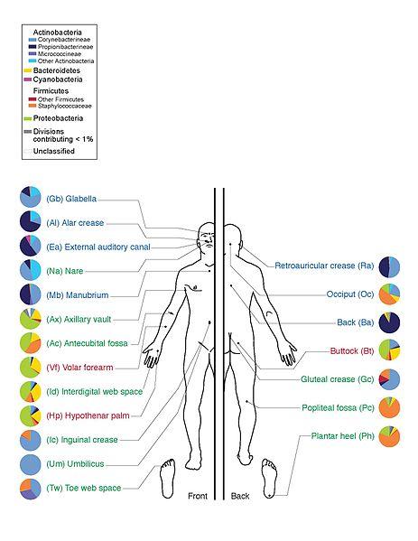 463px-Skin_Microbiome20169-300