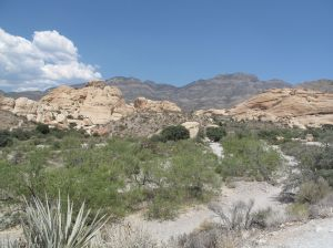 Red Rock Canyon, Nevada. We rented a car and drove out there in search of wild burros.